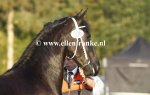 Bestelnummer 180818236 Willeke fan it Huningspaed (Hette x Ulke).JPG